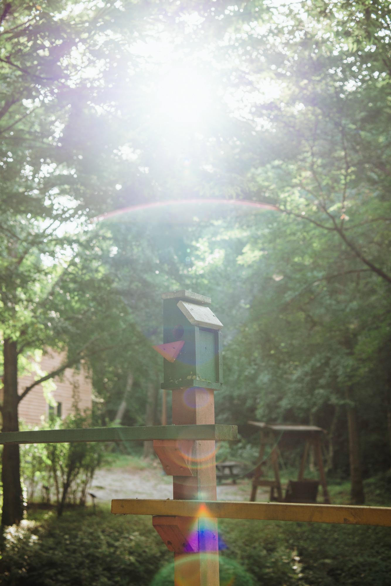 청송자연휴양림의 햇살