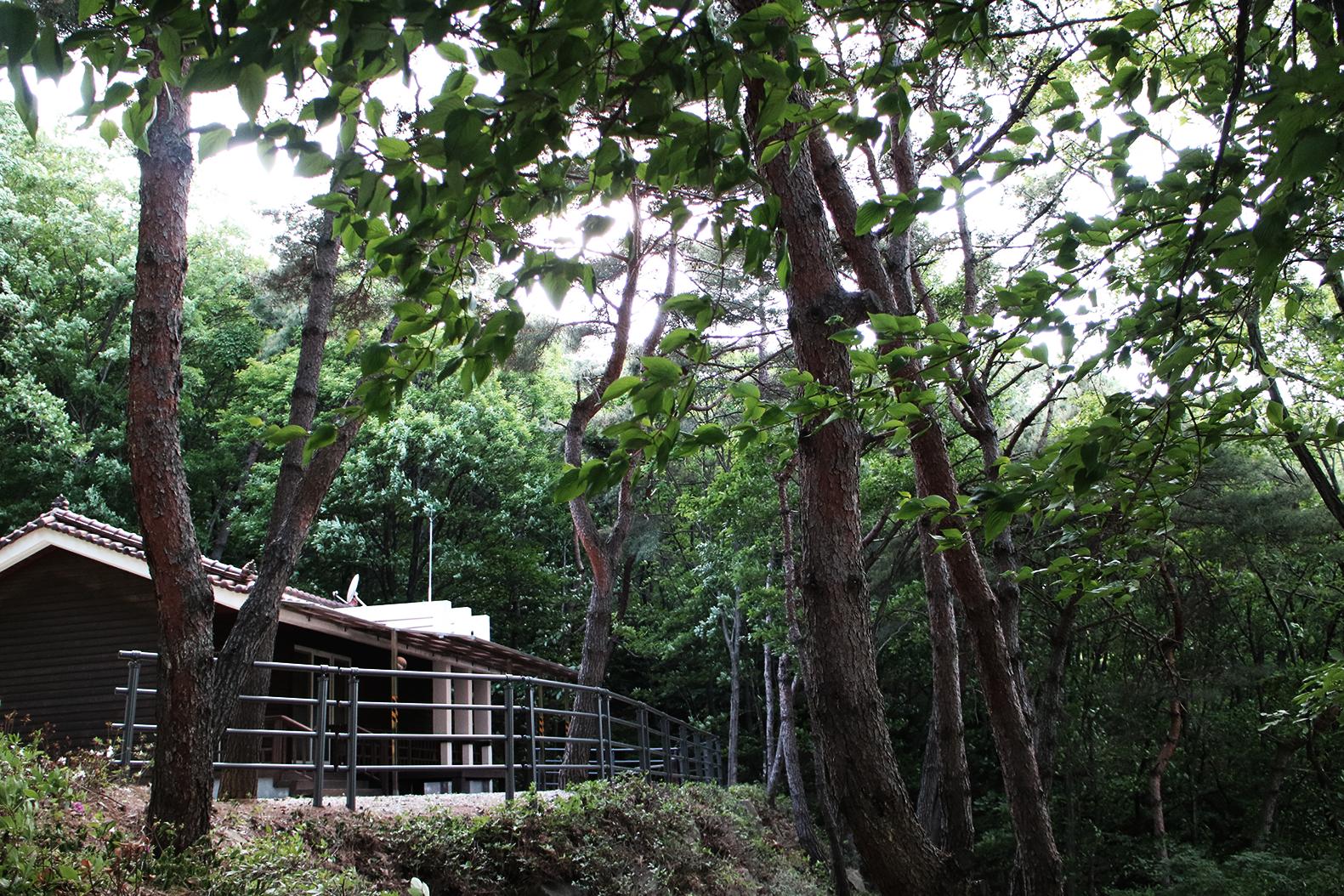 깊은 숲속의 작은 집 -자정향