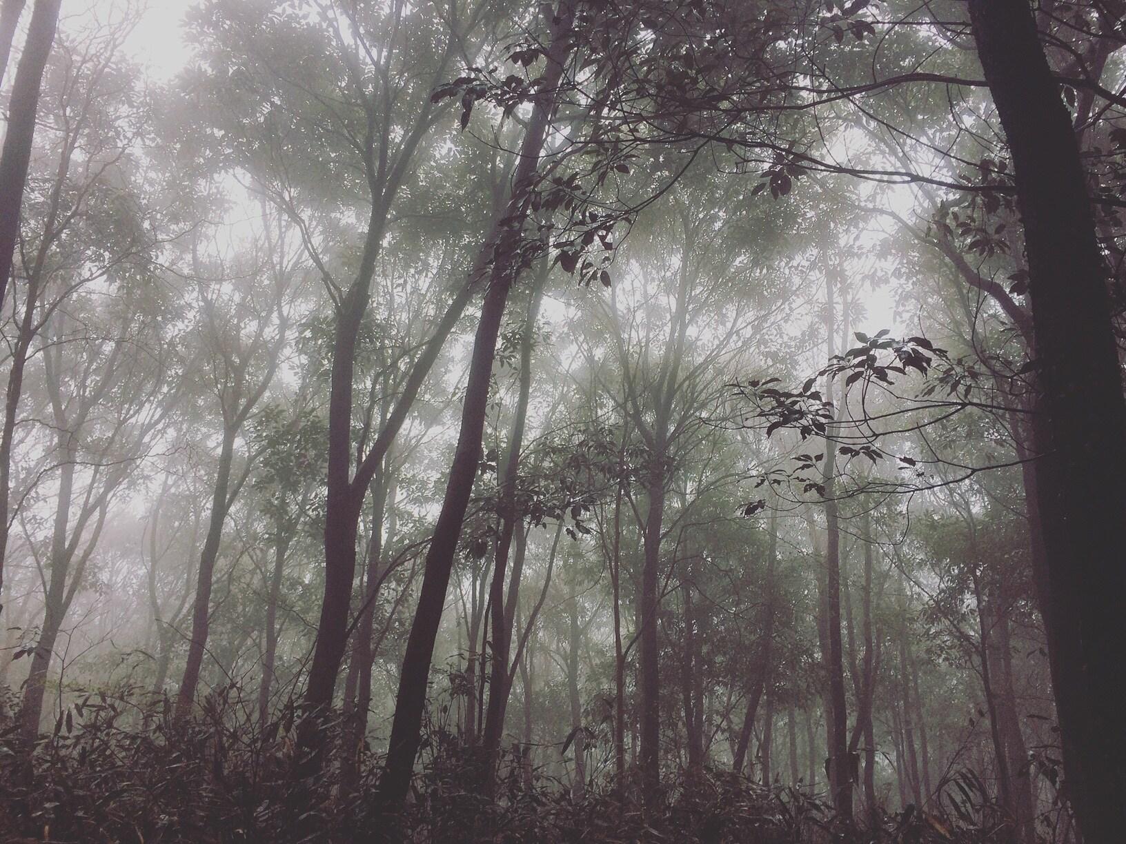 휴양림 4월 안개숲길