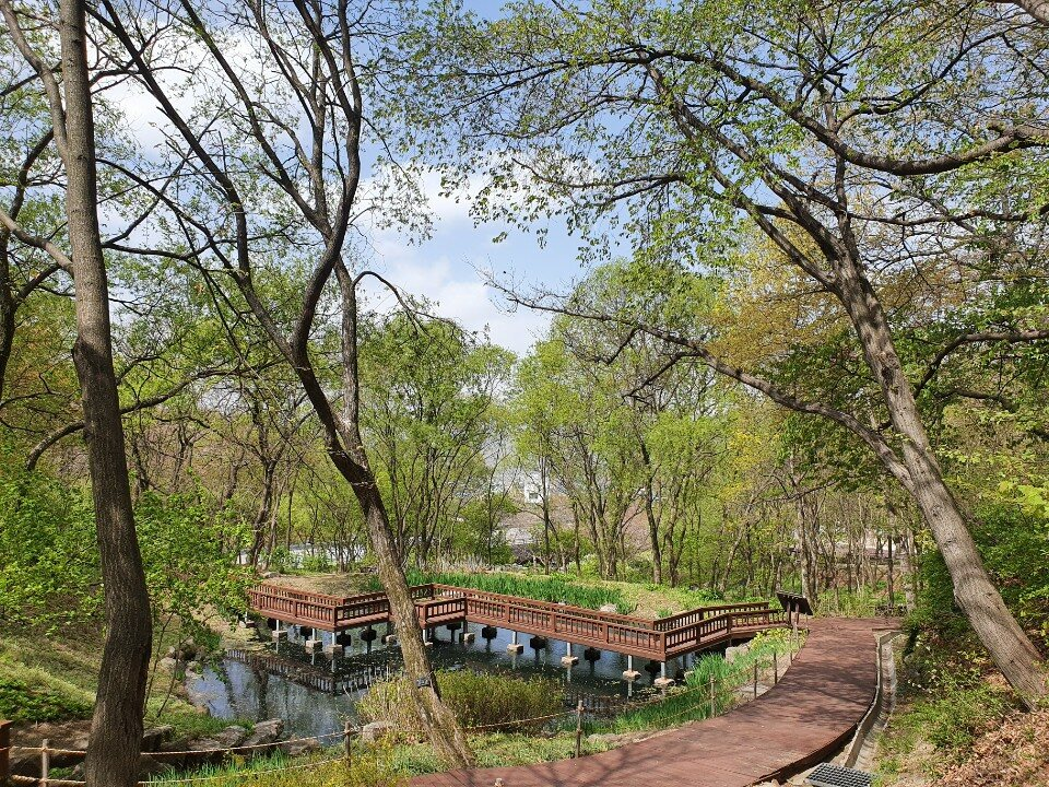 4월 봄-습지