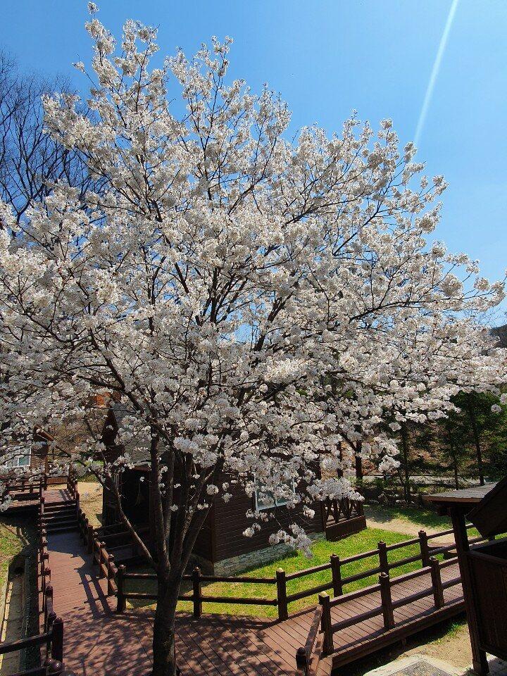 4월 봄-느티골
