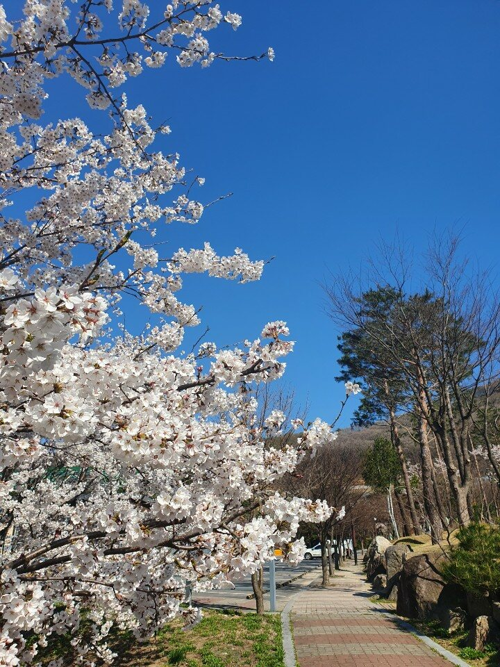 4월 봄-주차장
