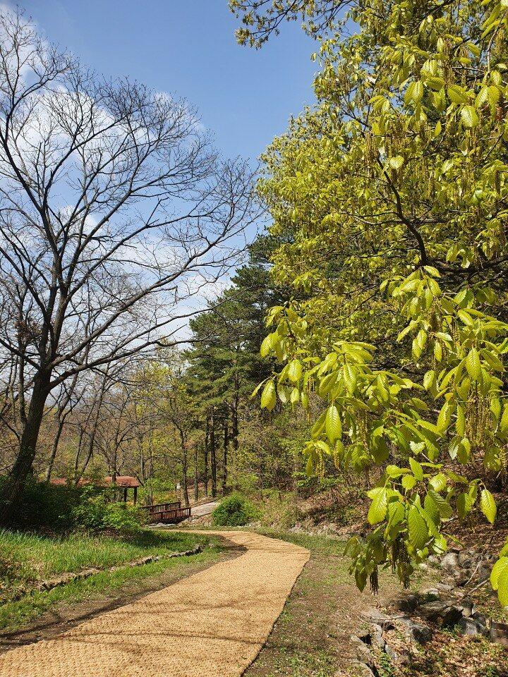 4월 봄-산책로