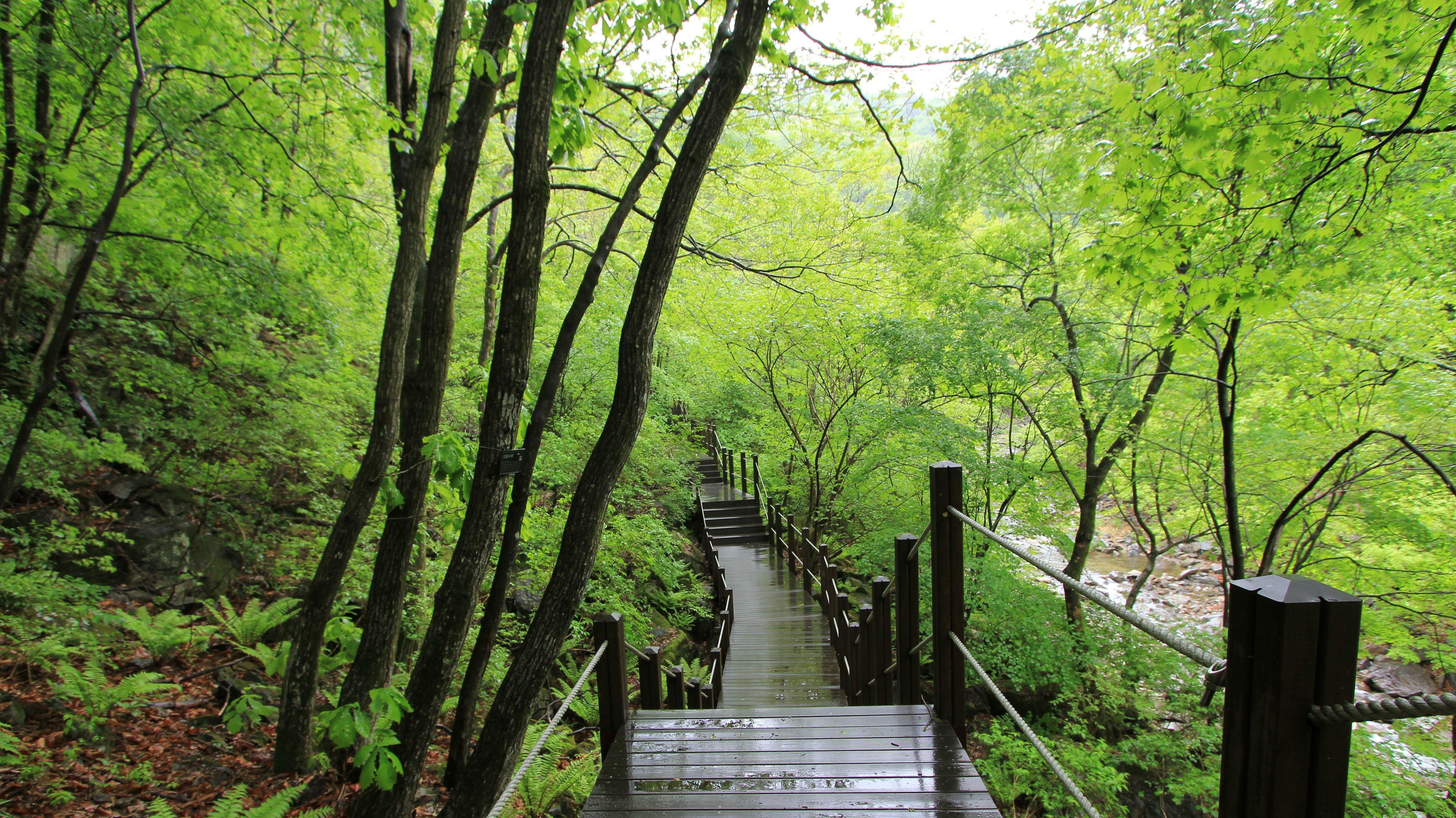 강씨봉자연휴양림 산책로(봄)