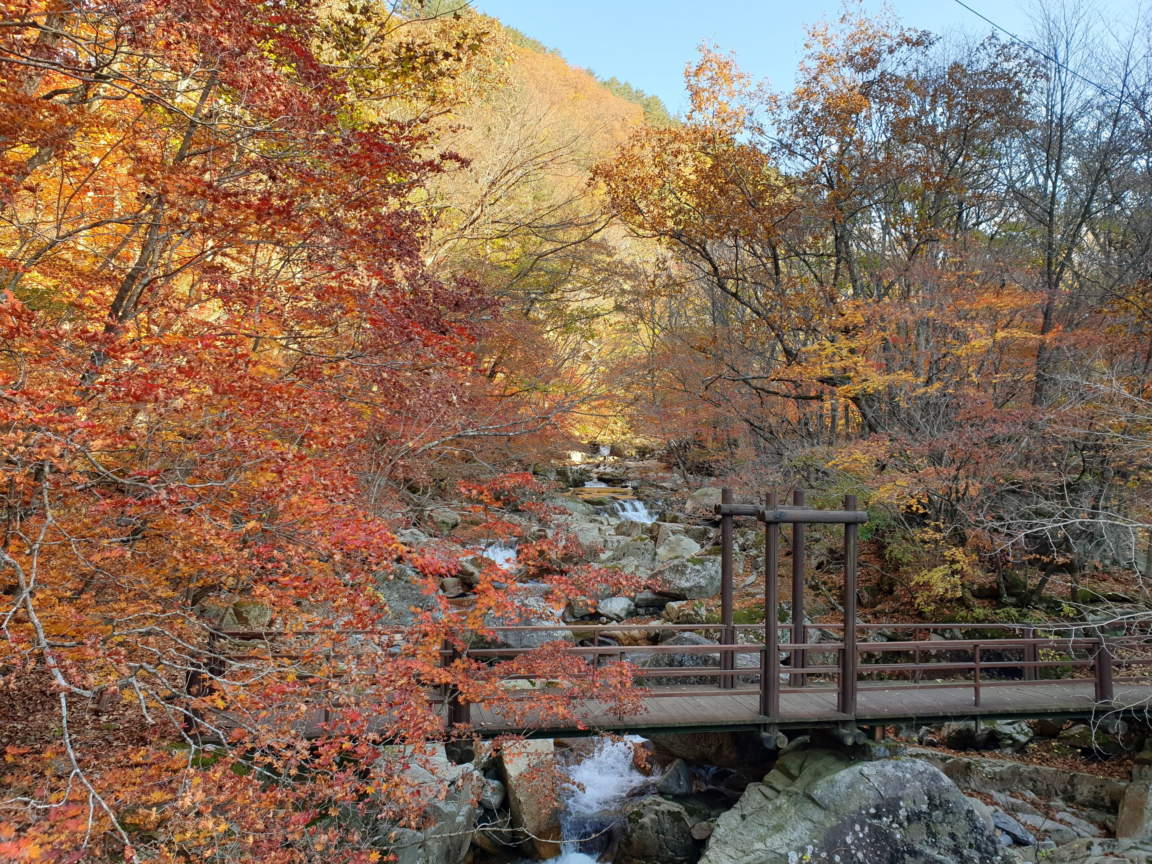 방태산자연휴양림 계곡 가을단풍(구룡교)_2020년 10월 20일 15시 촬영.jpg