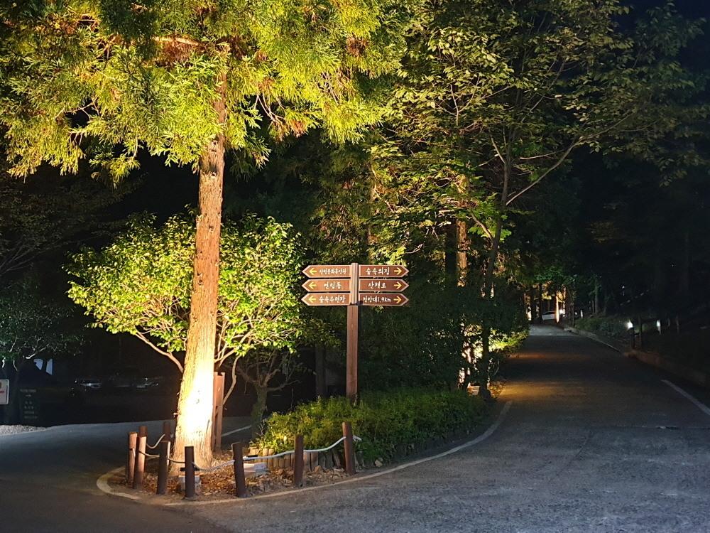 휴양림 야간조명3