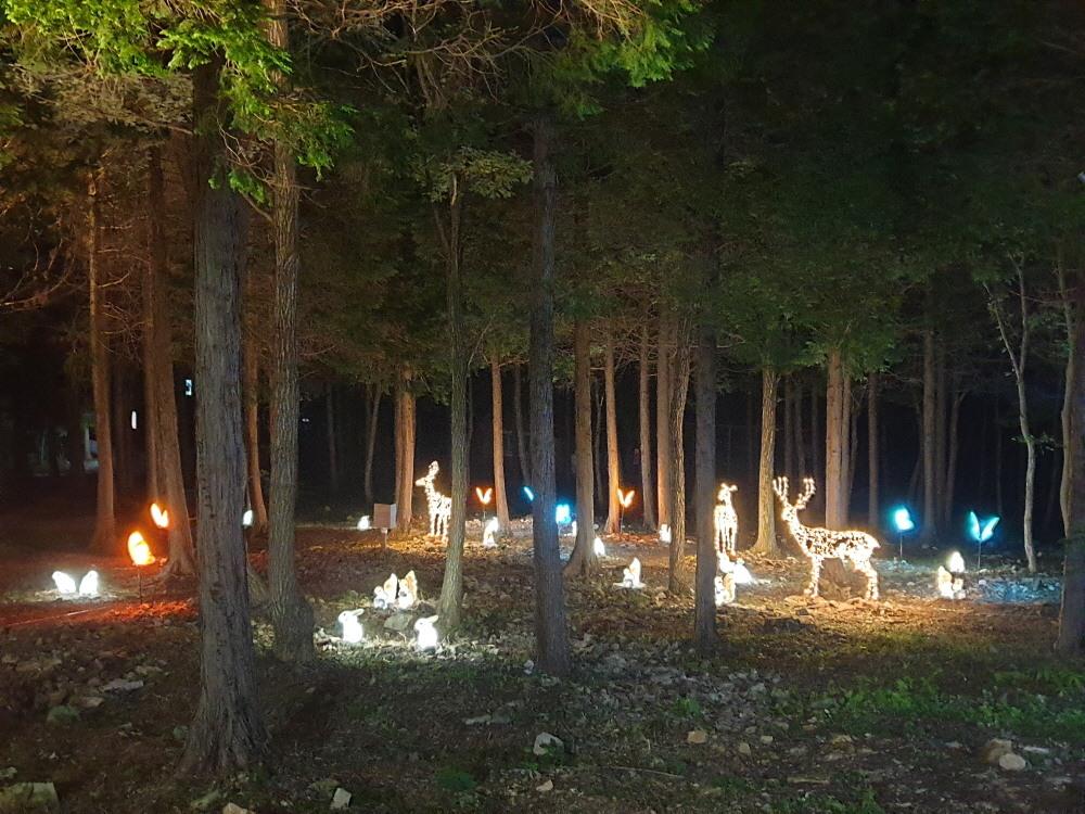 휴양림 야간조명4