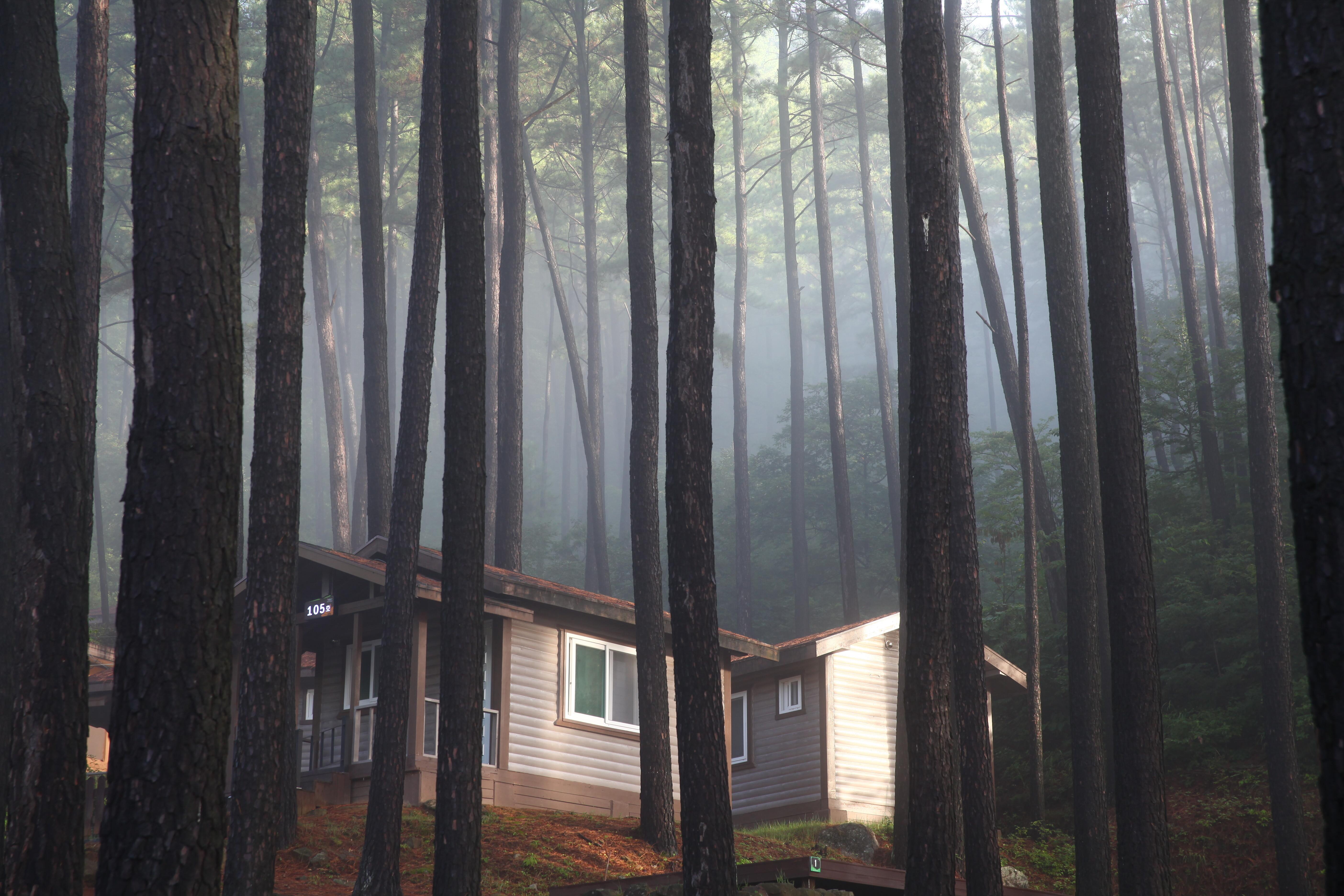 숲속의 집 새벽 풍경