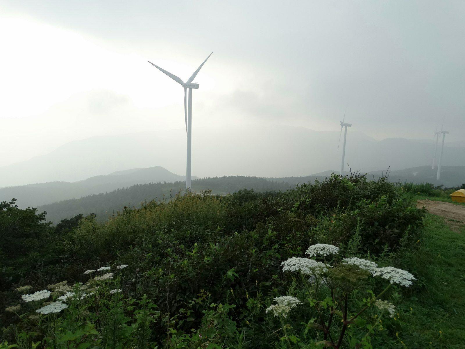 휴양림 뒤편 태기산풍력발전기