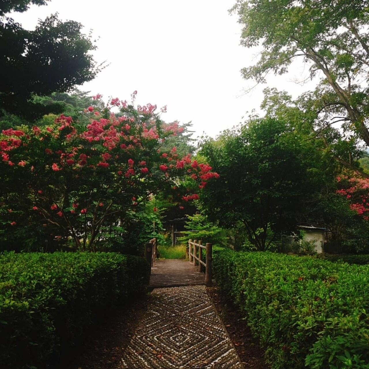 배롱나무 꽃길^^