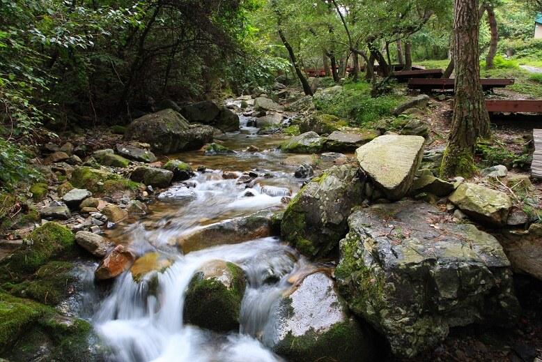 오도산자연휴양림 맑은 계곡물