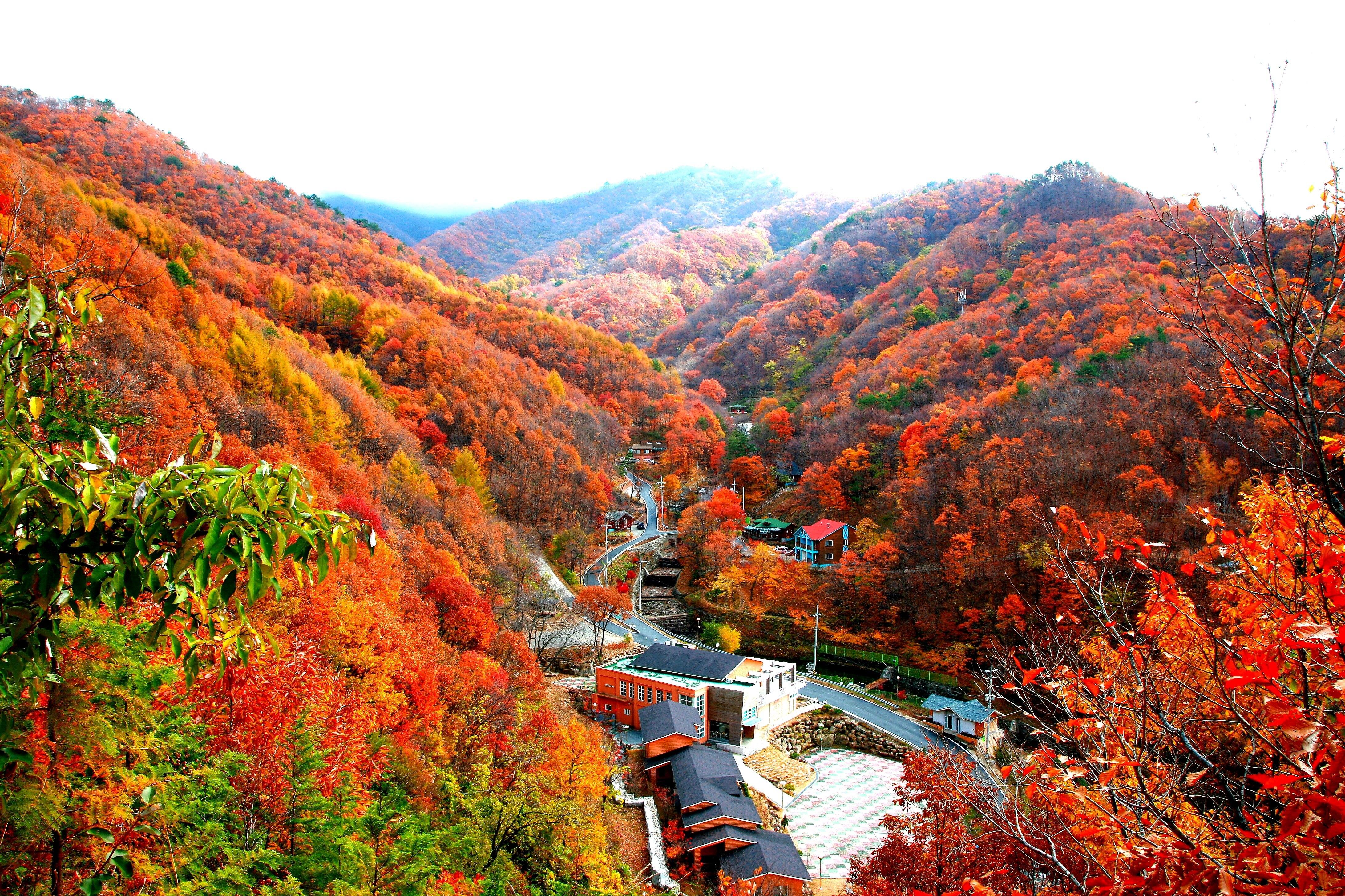 민주지산자연휴양림 가을