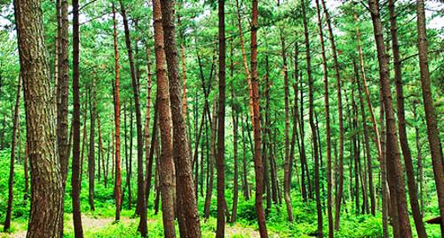 (서천군)희리산자연휴양림
