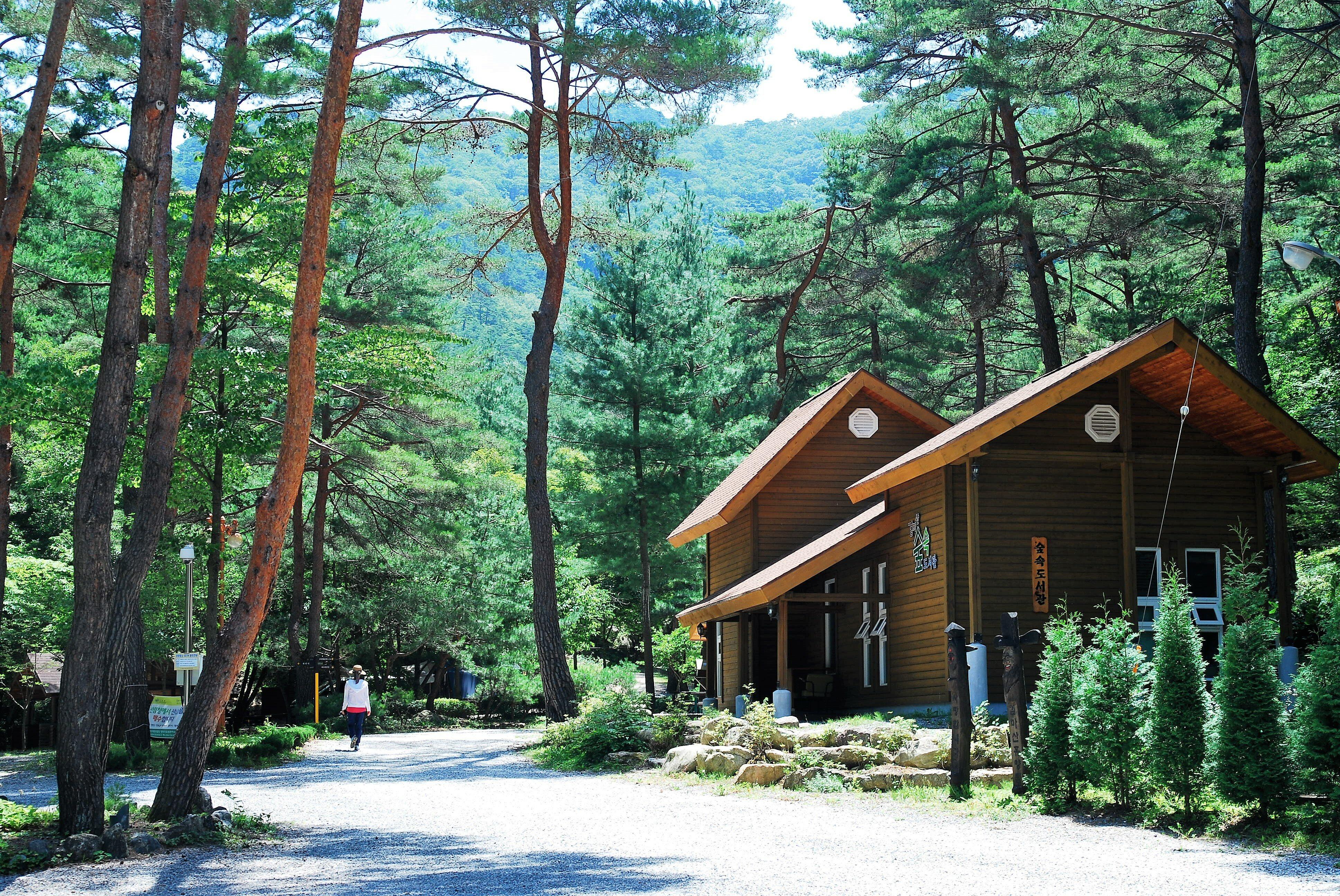 숲속도서관(여름)