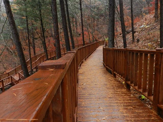 산음의 가을 - 치유의 숲길 -